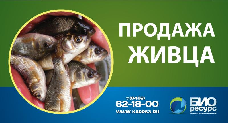 Продажа живца в Тольятти