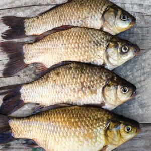 Зимняя рыбалка тольятти