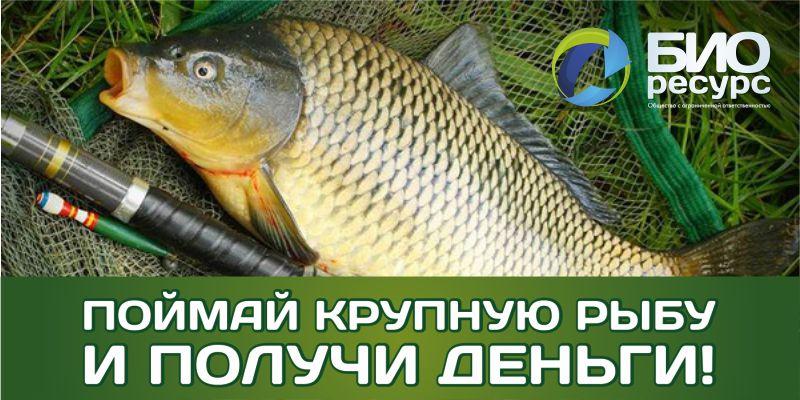 акция поймай крупную рыбу