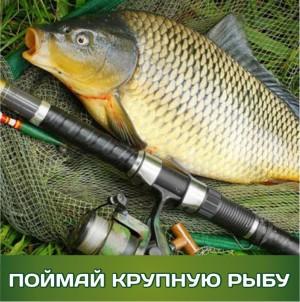новости поймай крупную рыбу