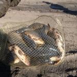 Рыбалка в Сусканском заливе
