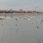 Первые весенние фото прудов в с.Лопатино